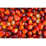 Palmové orechy (Elaeis guineensis) 5kg