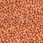 Lúpané arašídy 25kg