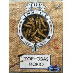 TOP INSECT Zophobas Morio 400g / 1 liter